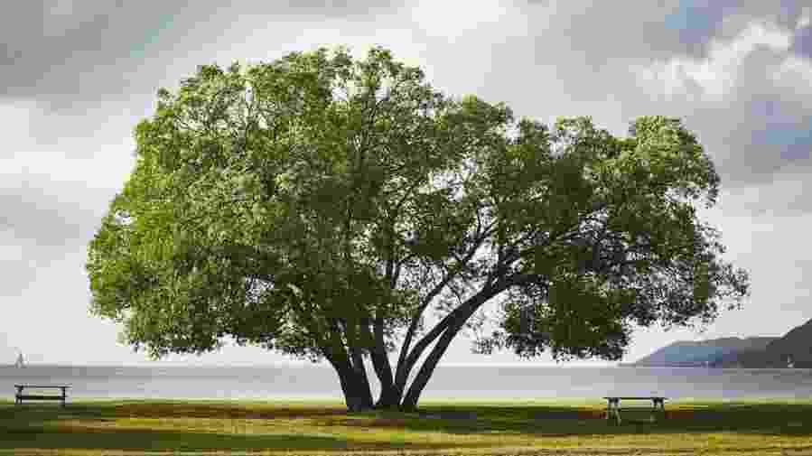 "Photo of ""broccoli tree"""